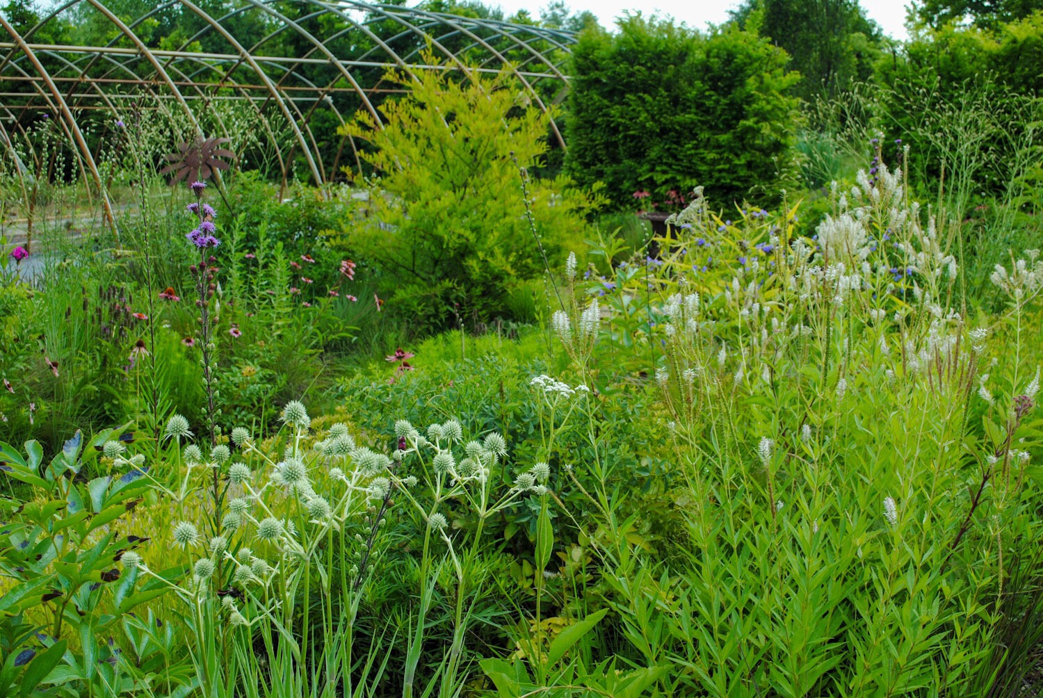 This wild and fancy-free patch called Trudy's Garden was tucked in between polyhouse frames.