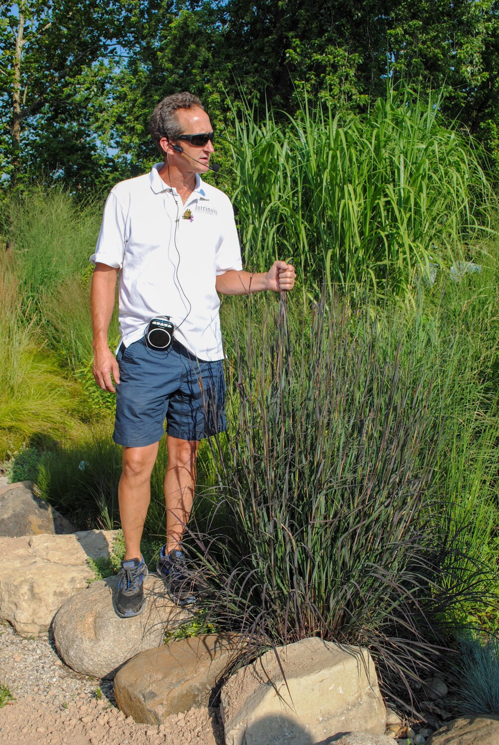 In the grass garden Brent stands with a 'Blackhawks' Andropogon, a nice purple form that he selected.