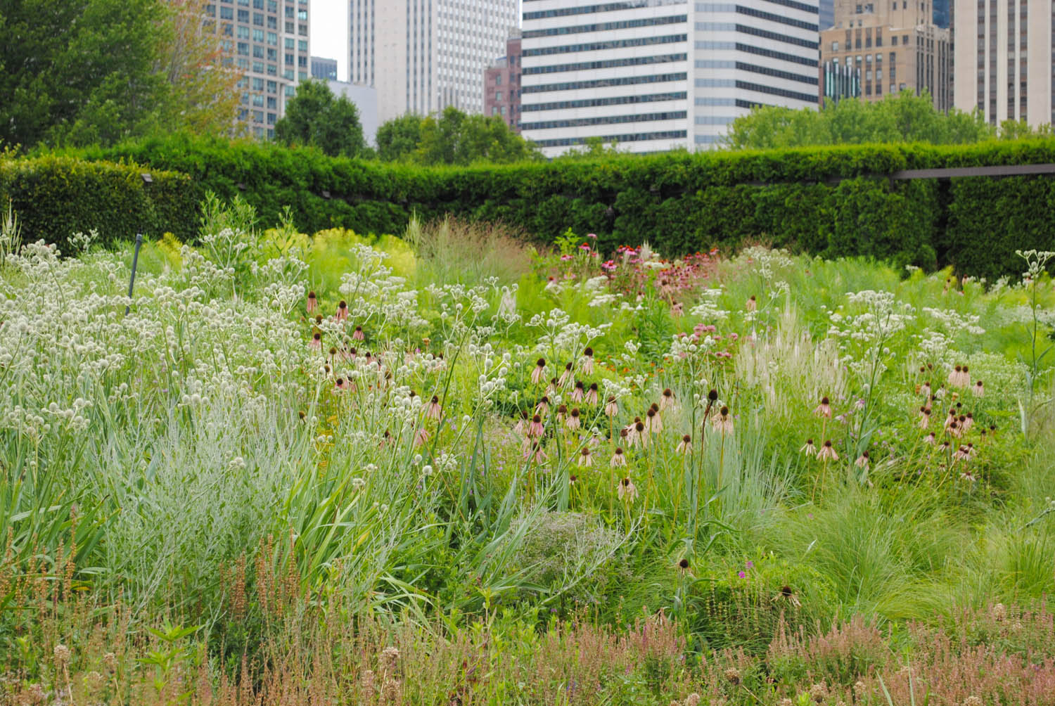 In the lower right you can spy some tussocks of  Sporobolus heterolepis  amongst the perennials.