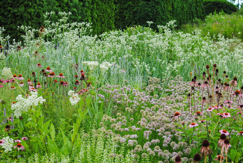 Here you see  Allium lusitanicum  'Summer Beauty' mingled around taller perennials.