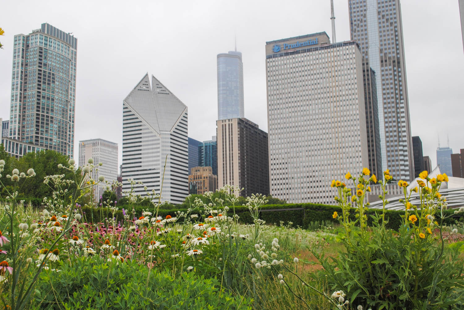 "We learned at the Perennial Plant Association's symposium that Chicago's city motto is ""urbs in horto"" or ""city in a garden."" With plantings like the Lurie Garden, it certainly lives up to that reputation."