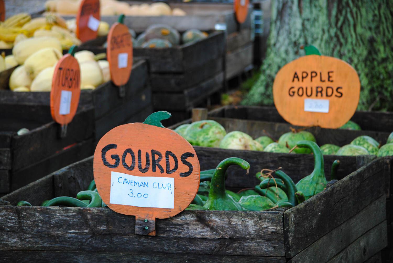 The pumpkin cutouts were such a clever idea for marketing.