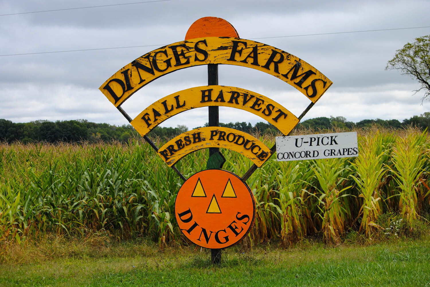 Dinges Farms had really good signage to help visitors find them.