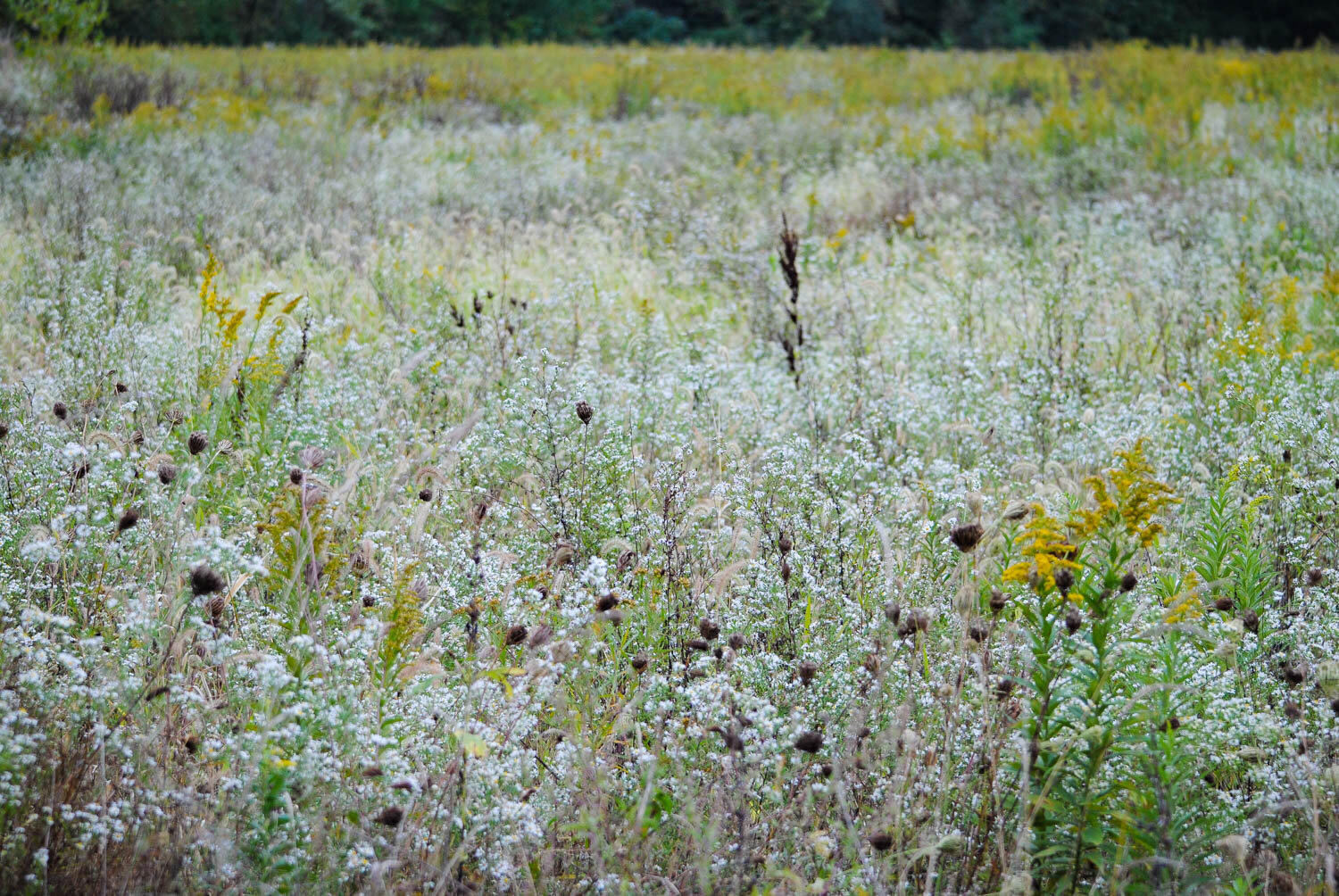 Fields of gold and fields of froth.