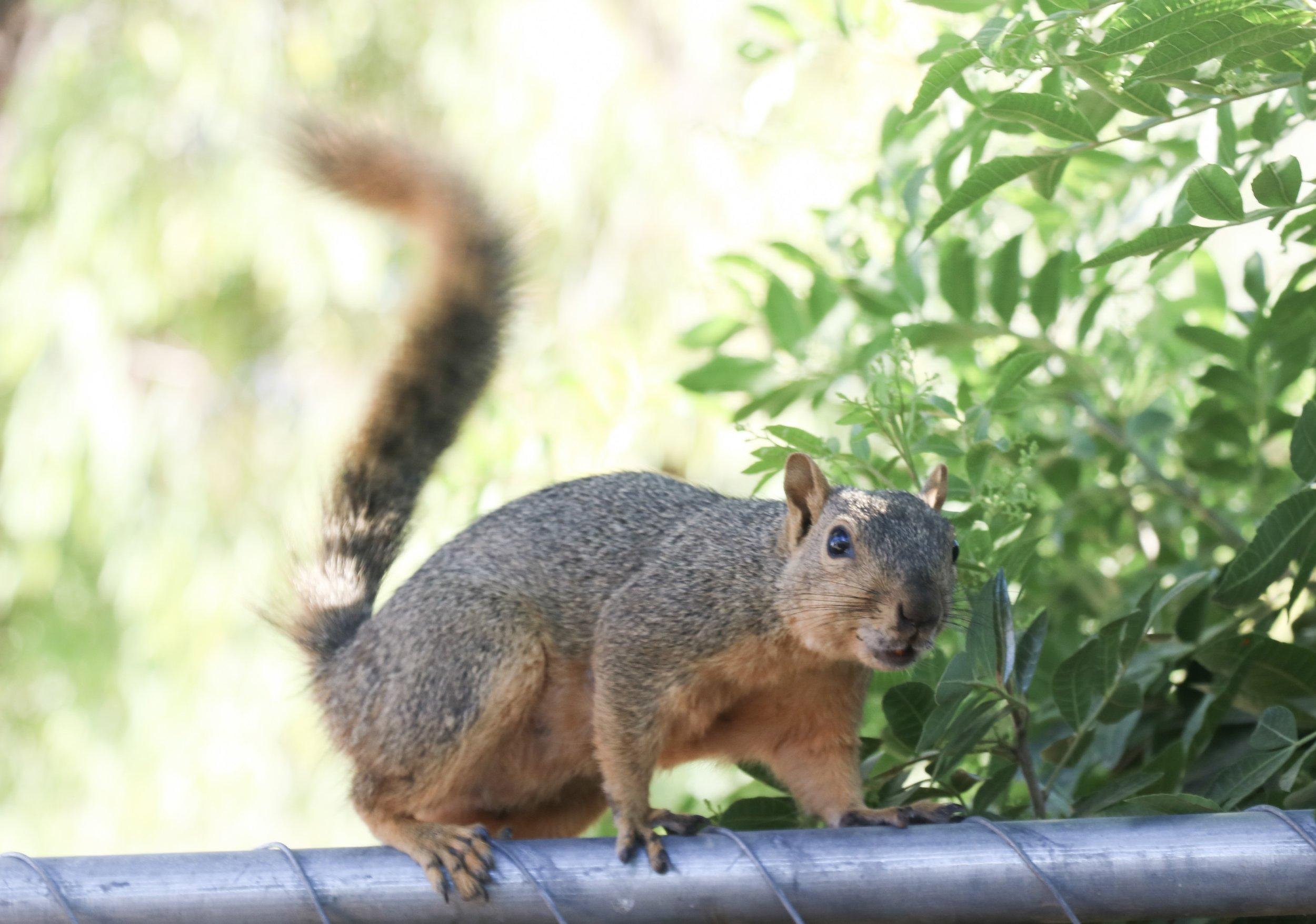 A squirrel enjoying its closeup.   Photo Credit: Lola Olvera