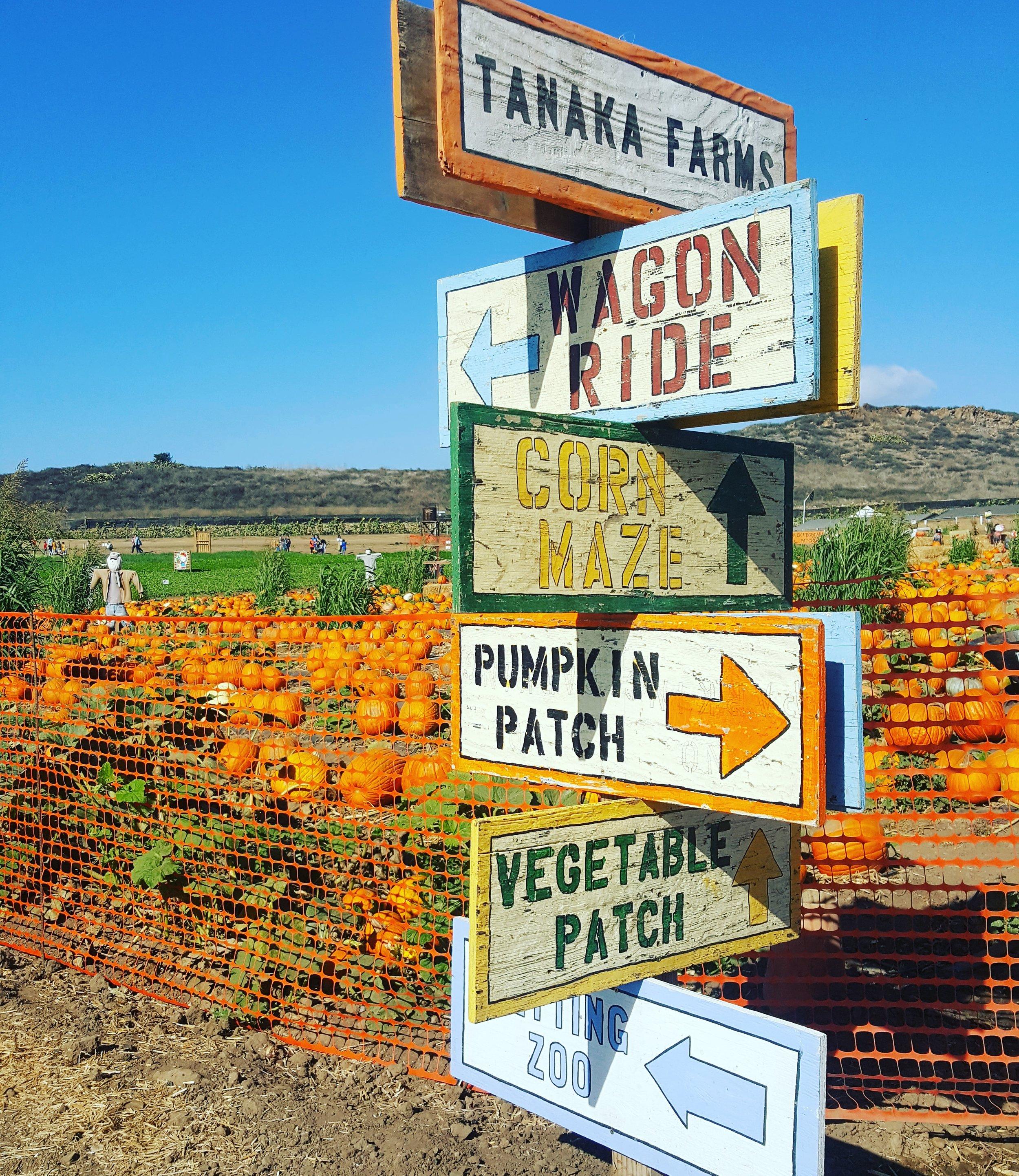 Tanaka Farms' seasonal pumpkin patch opens September 21, 2019.