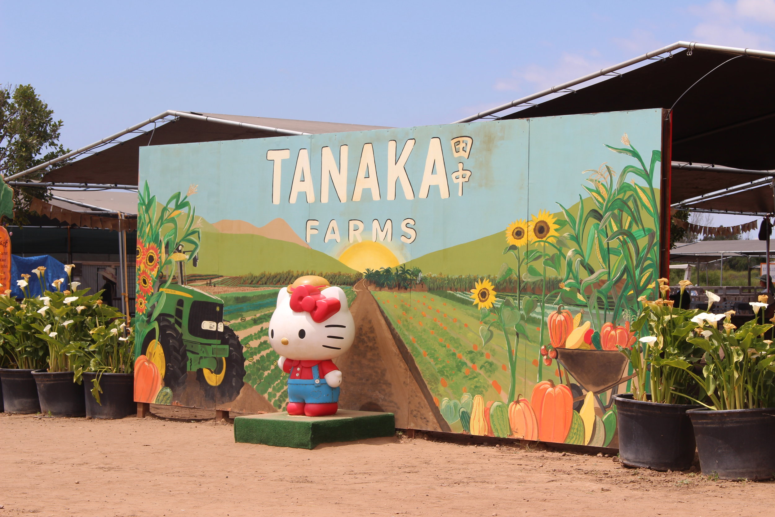 Tanaka Farms knows we all need cute pictures for the 'gram.