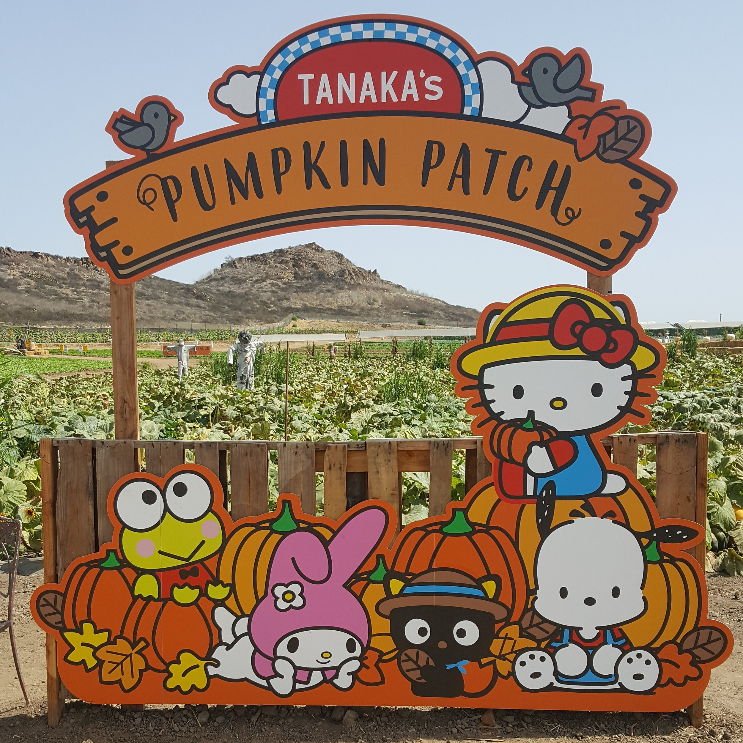 As a result of their partnership with Sanrio, Tanaka Farms has Hello Kitty-themed events and merchandise.