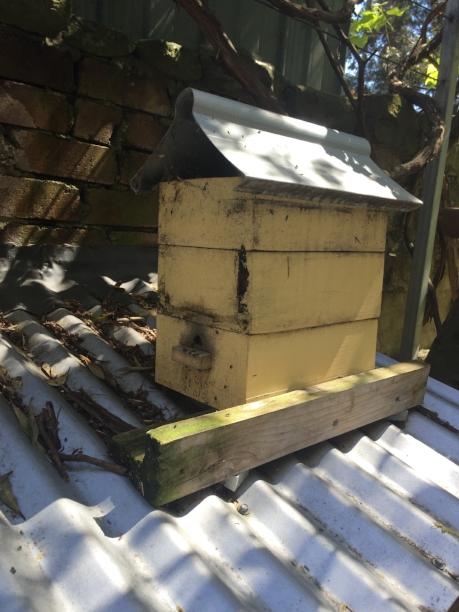 Native bee hive in my back garden