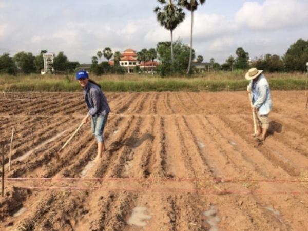 •  Anika Molesworth preparing field for planting trial maize