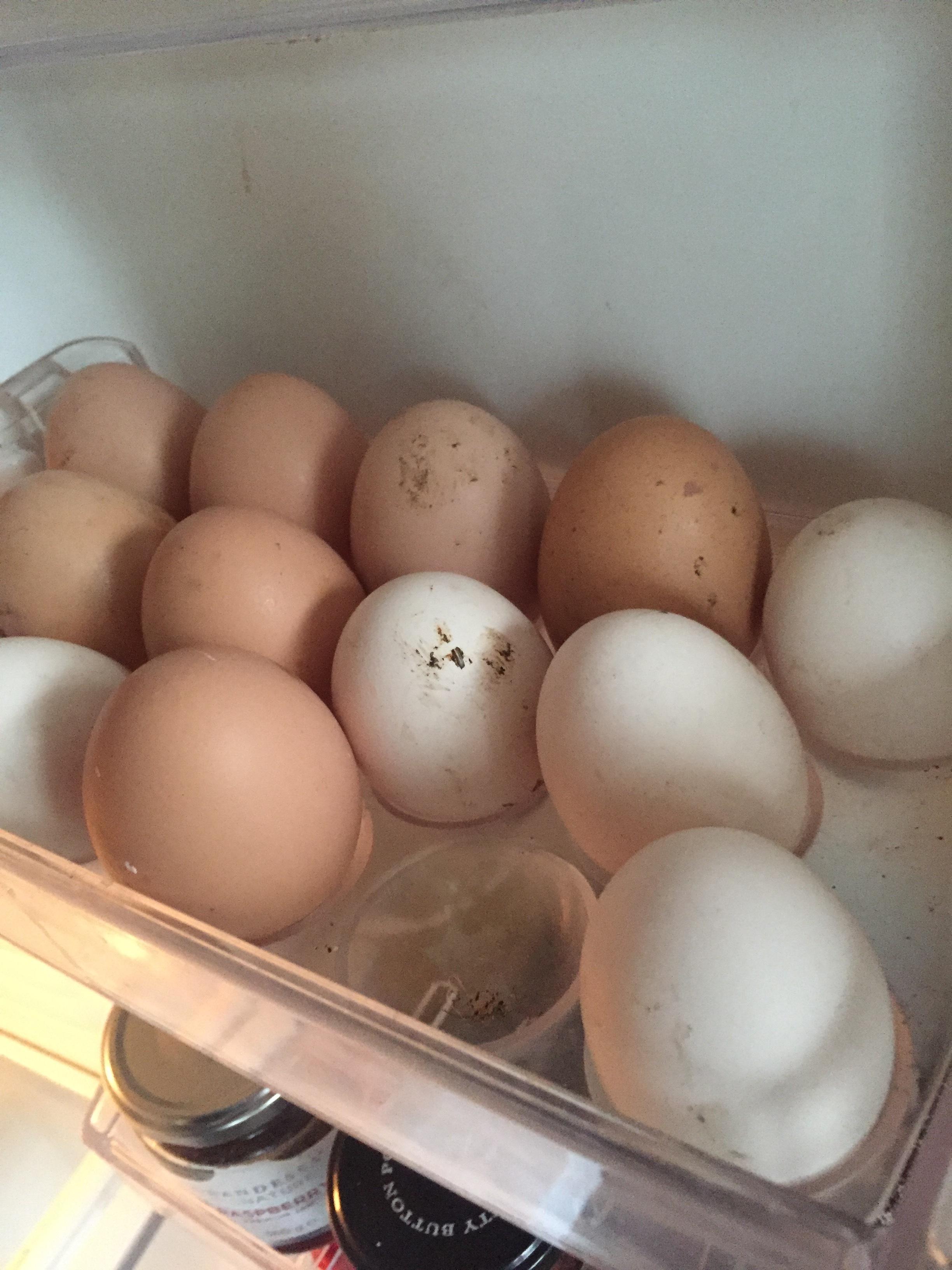 • My chook eggs