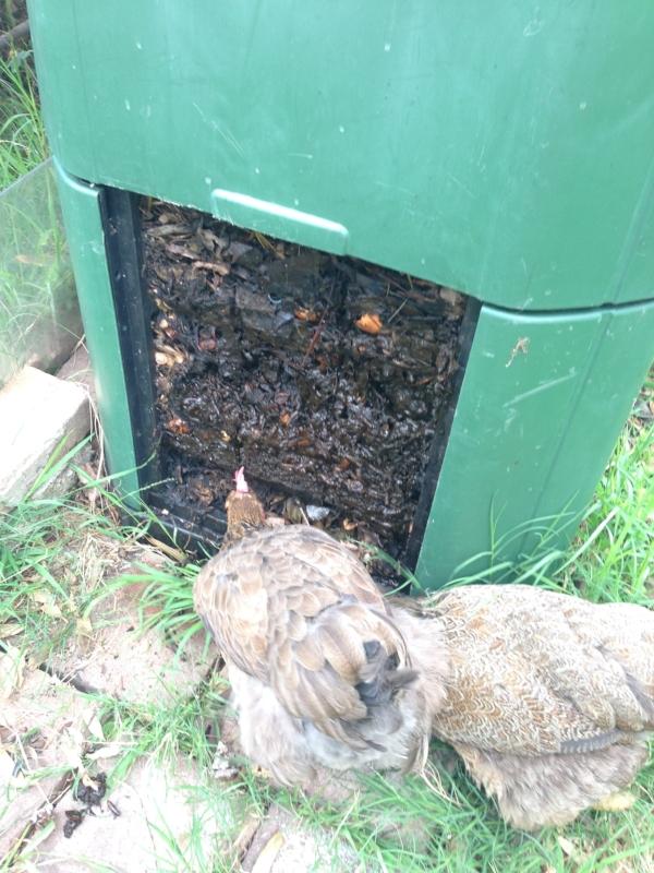 •  Chooks love compost