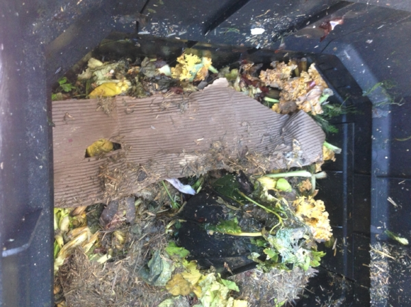 •  Composting food waste and cardboard