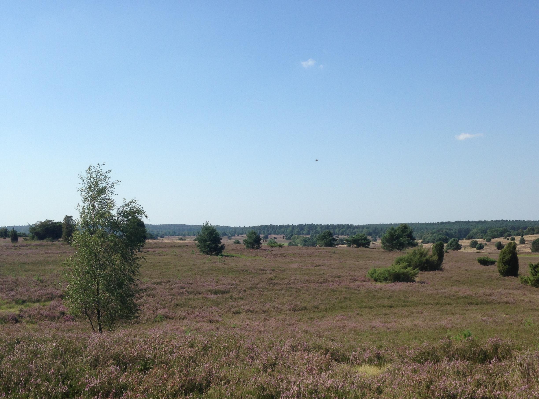 Die Lüneburger Heide - das älteste Naturschutzgebiet Deutschlands und mein Zuhause seit meiner Kindheit. Hier gibt es wunderschöne Wanderwege, nette Heidelokale und interessante Ausflugsziele.