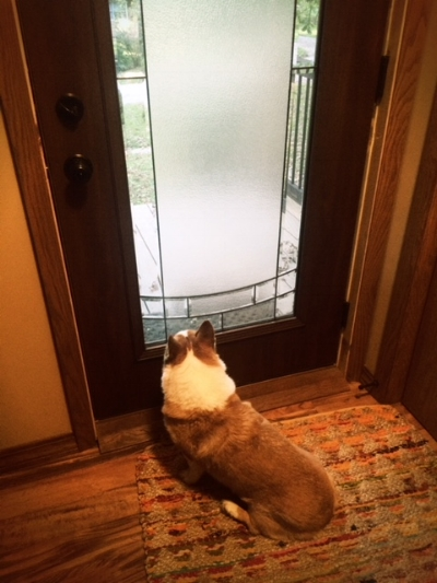 Scott took this pic of Q waiting for me to come home.