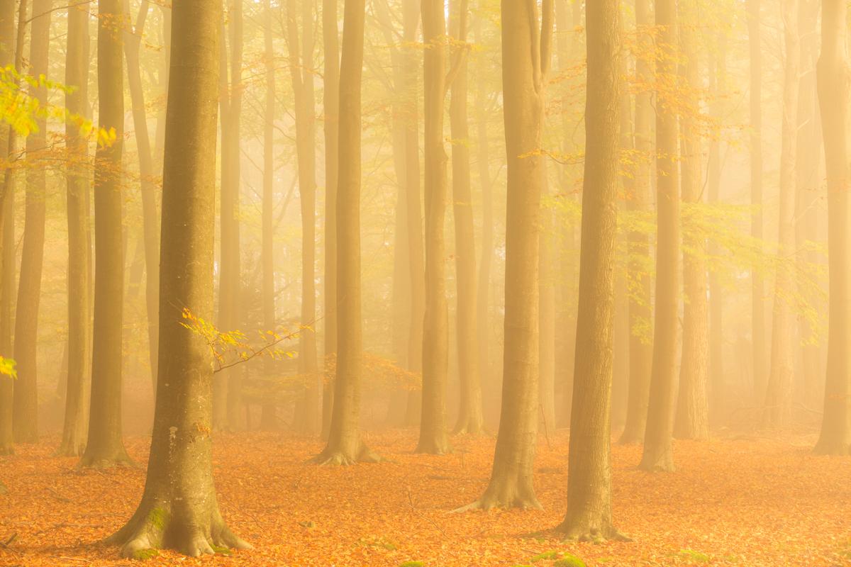Mistig bos, Dwingelderveld