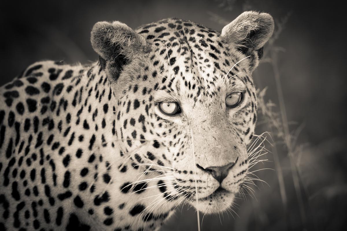 Gary, Botswana