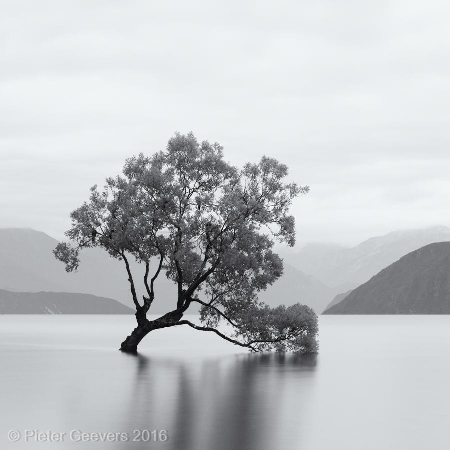Wanaka tree, Lake Wanaka, NZ