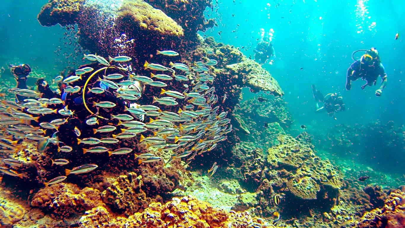 Fun Diving Bida Nok - Koh Phi Phi, Thailand