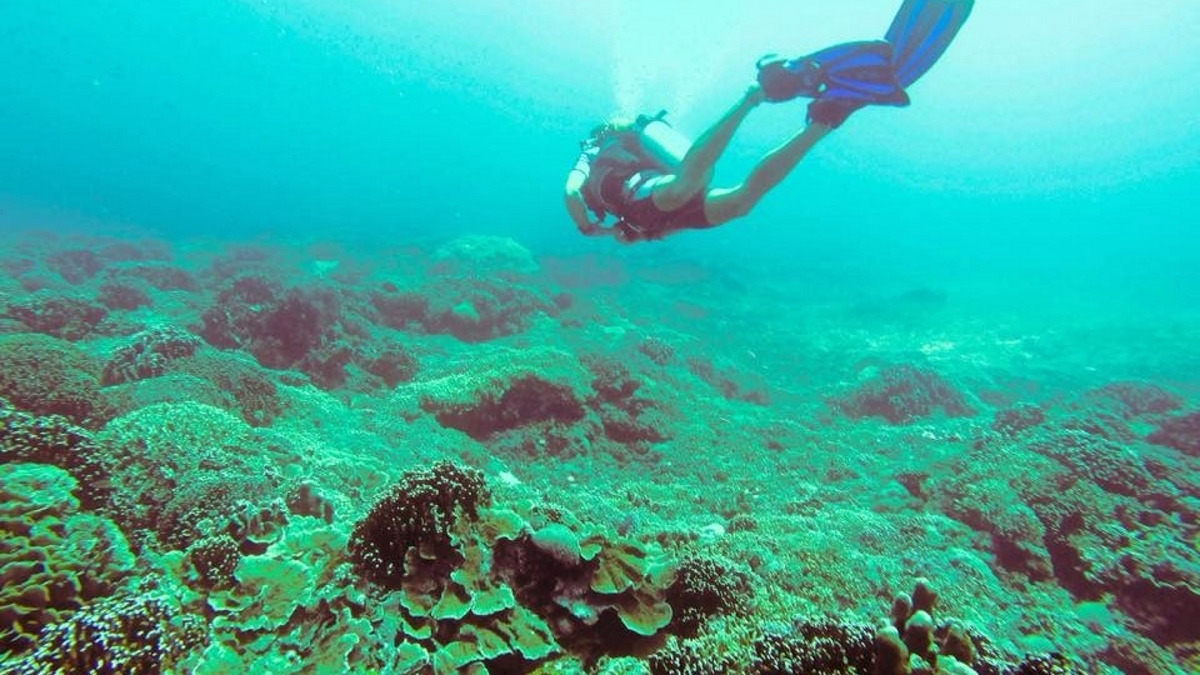 Book Now - PADI Open Water Course from 14490฿