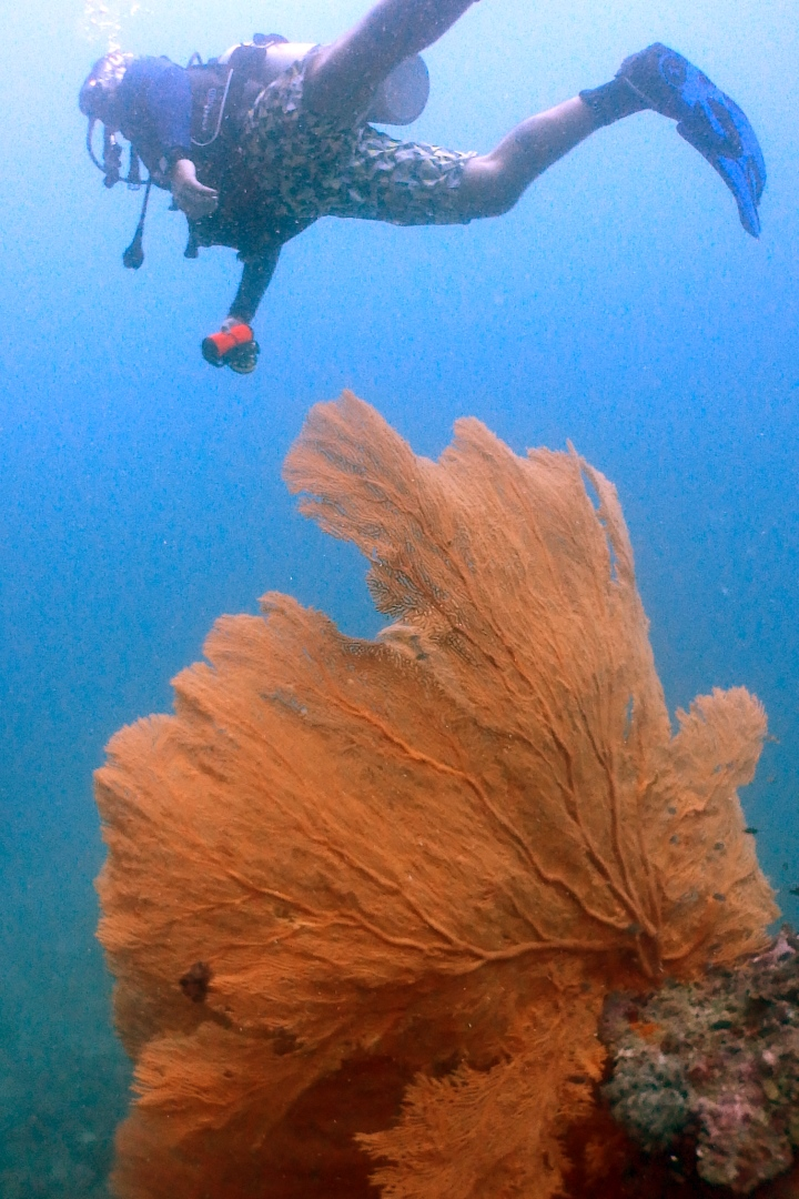 Coral Reefs - Phi Phi Thailand - Beachfront Divers.jpg