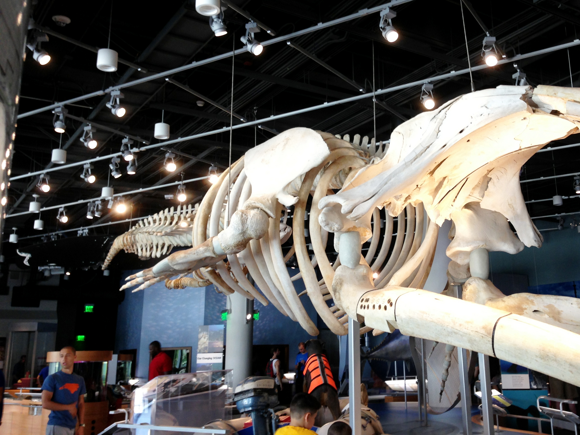 nc museum of science-fossil