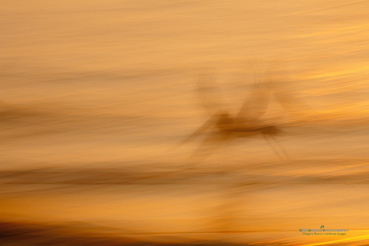 DGPstock-birds-24.jpg