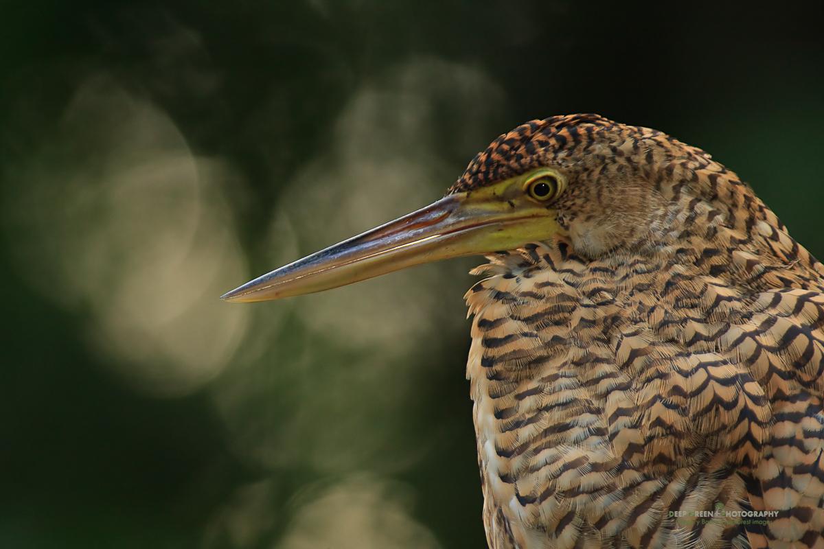 DGPstock-birds-19.jpg
