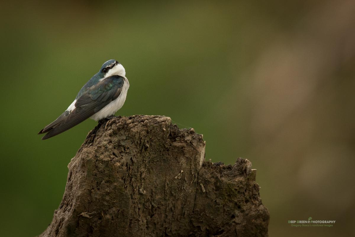 DGPstock-birds-134.jpg
