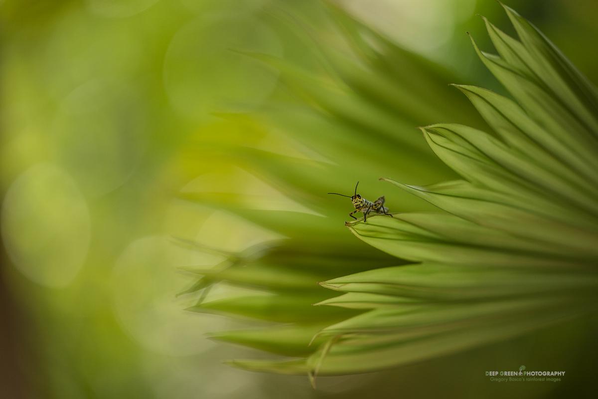 DGPstock-invertebrates-3.jpg