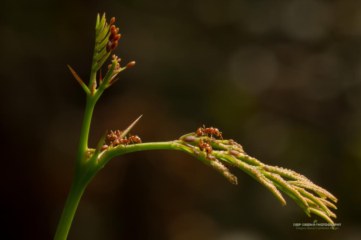 DGPstock-invertebrates-11.jpg