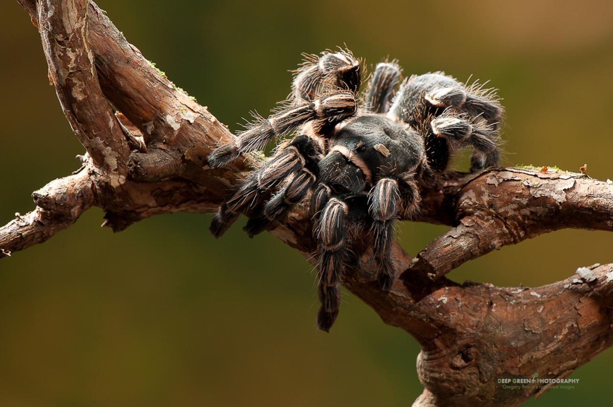 DGPstock-invertebrates-36.jpg