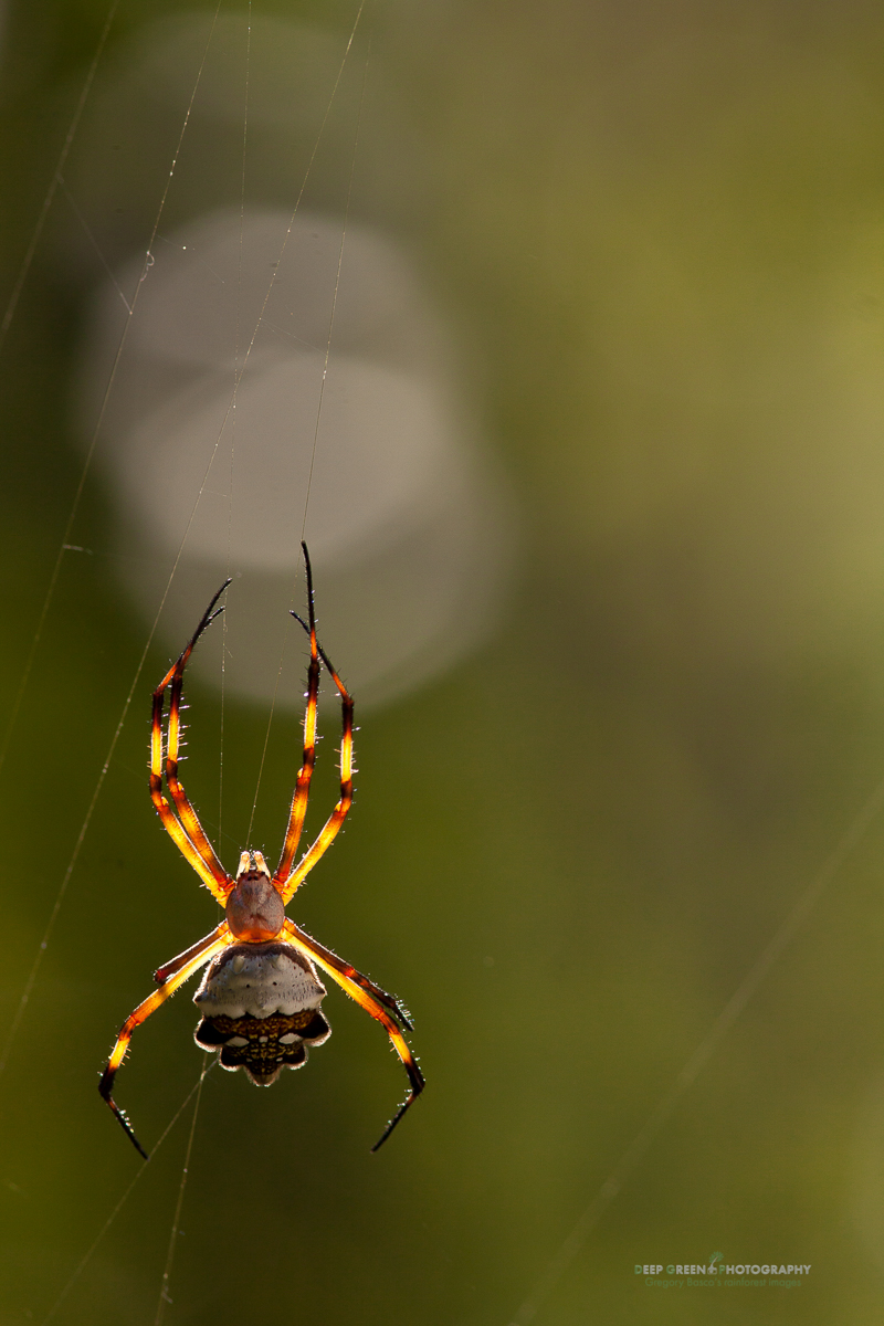 DGPstock-invertebrates-43.jpg