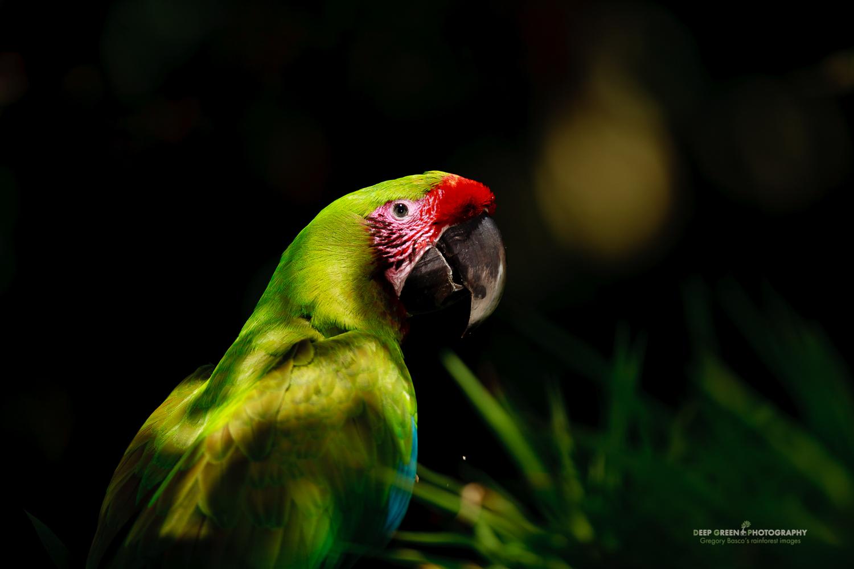 DGPstock-birds-38.jpg