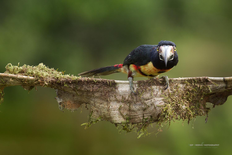 DGPstock-birds-62.jpg