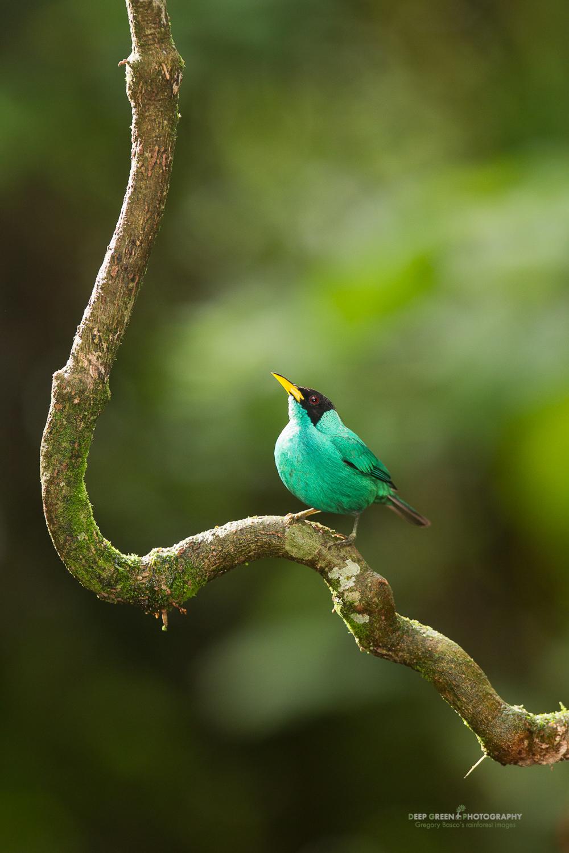 DGPstock-birds-90.jpg