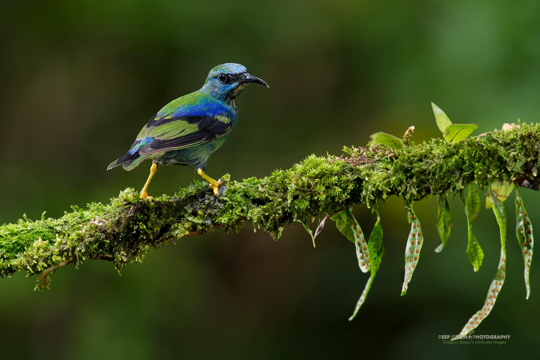 DGPstock-birds-88.jpg