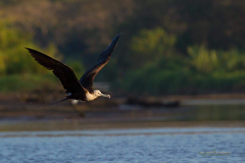 DGPstock-birds-96.jpg