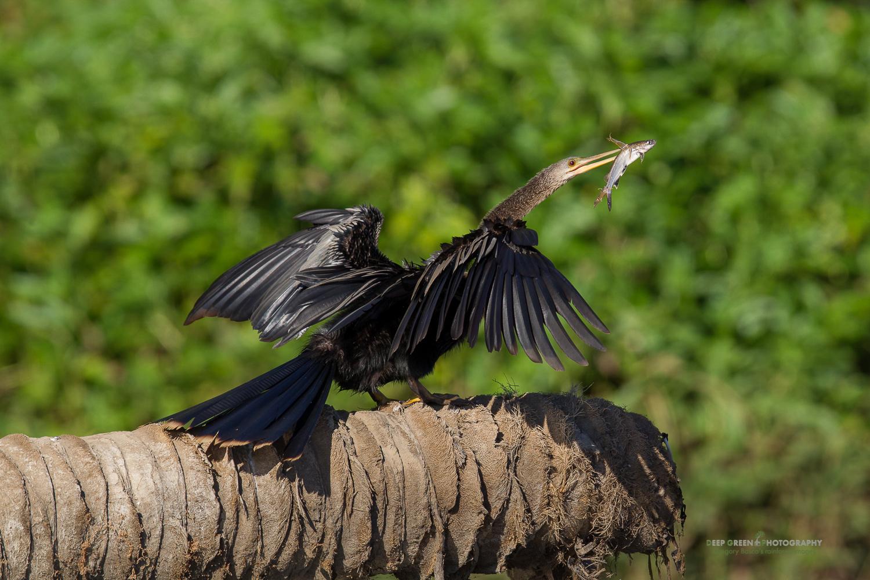DGPstock-birds-98.jpg
