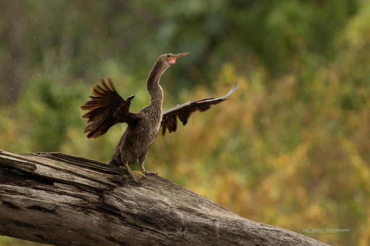 DGPstock-birds-132.jpg