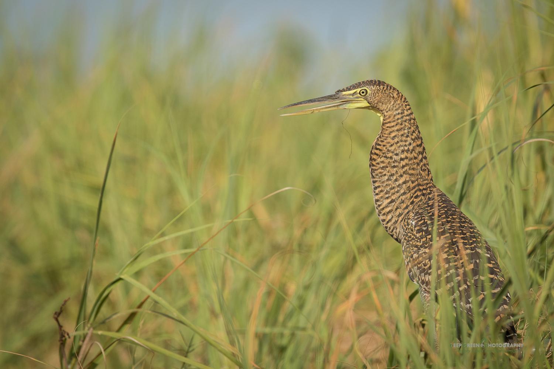 DGPstock-birds-136.jpg