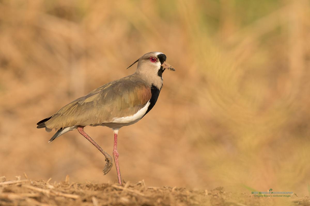 DGPstock-birds-140.jpg