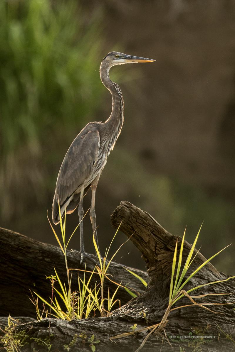 DGPstock-birds-139.jpg