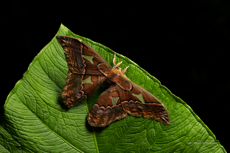 DGPstock-invertebrates-64.jpg