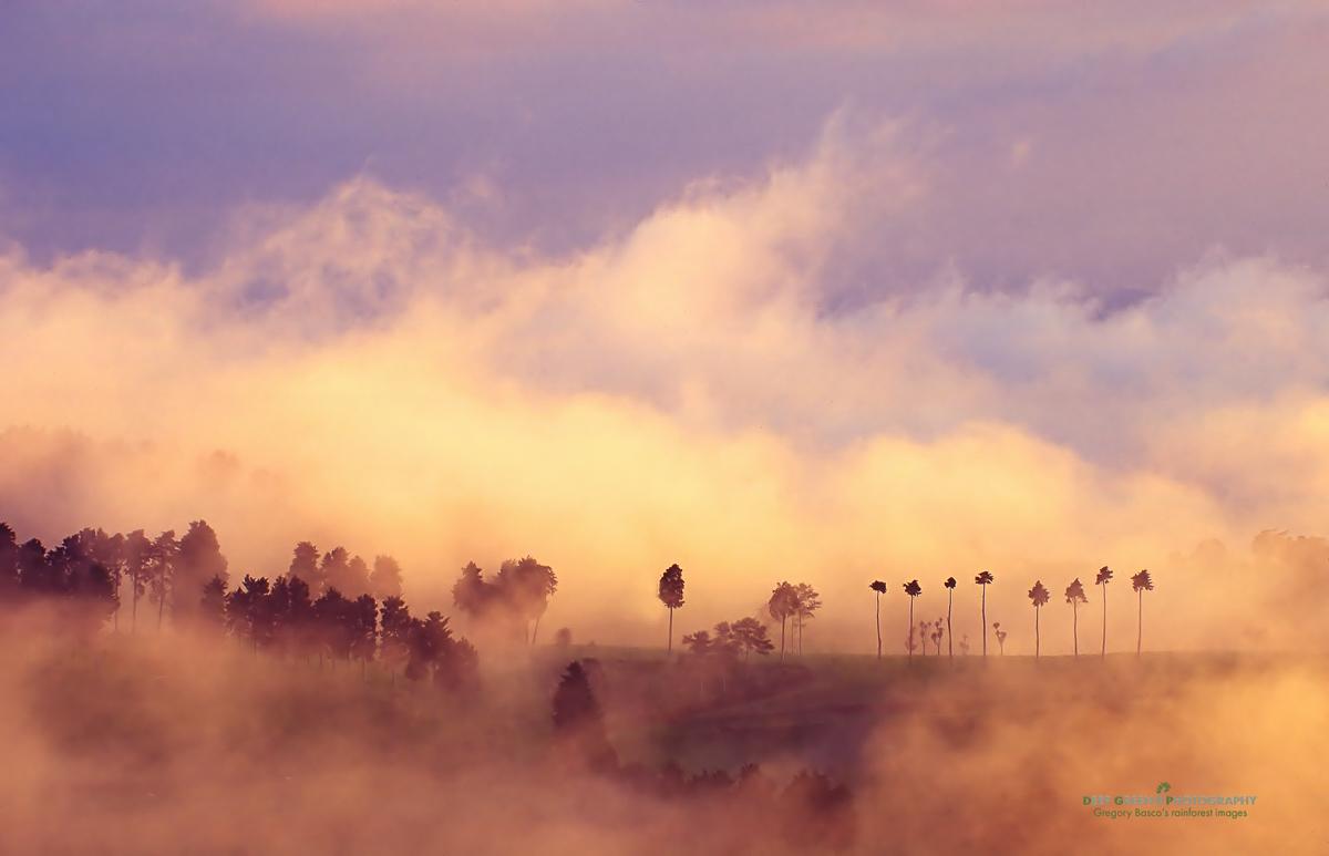 DGPstock-landscapes-53.jpg