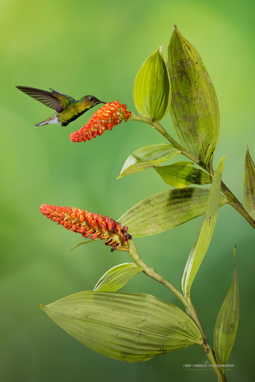 DGPprints-pollination5.jpg