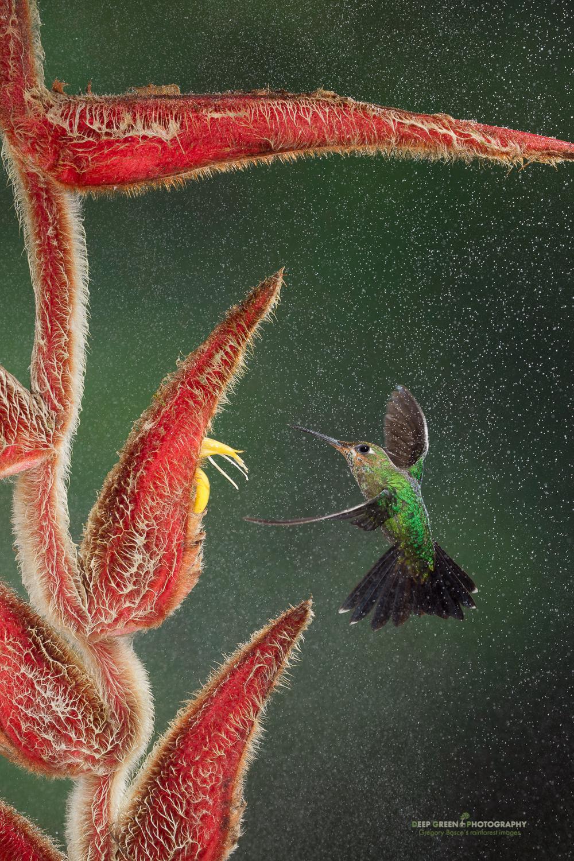 DGPprints-pollination6.jpg