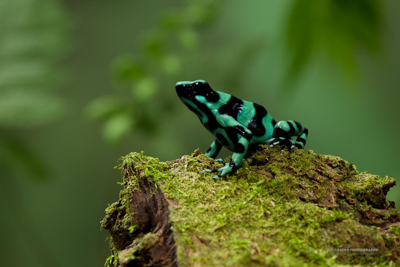DGPstock-frogs-22.jpg