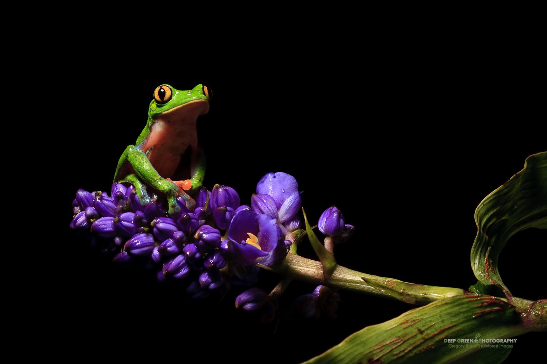 DGPstock-frogs-42.jpg
