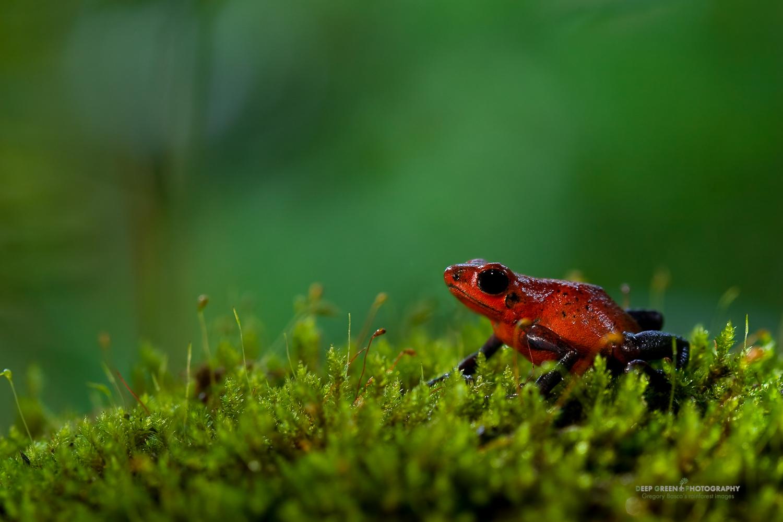 DGPstock-frogs-48.jpg